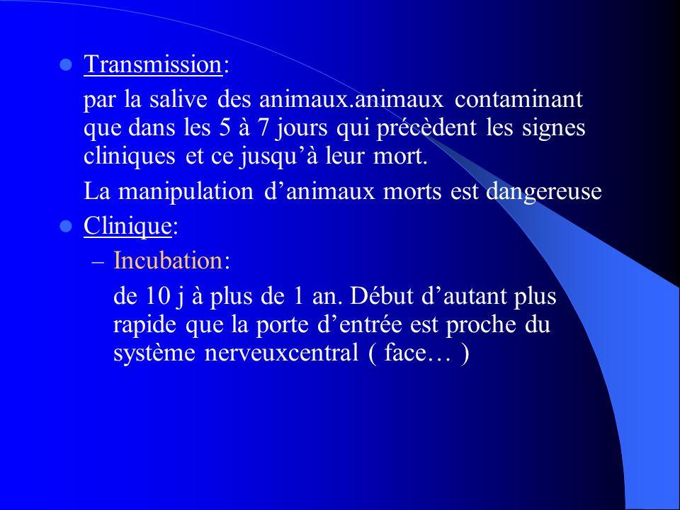 Transmission: par la salive des animaux.animaux contaminant que dans les 5 à 7 jours qui précèdent les signes cliniques et ce jusqu'à leur mort.