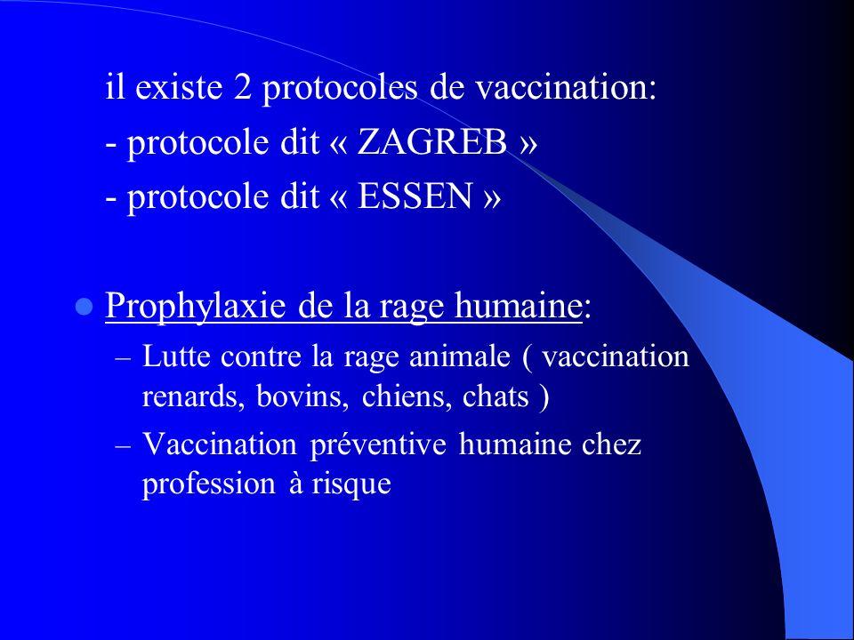 il existe 2 protocoles de vaccination: - protocole dit « ZAGREB »