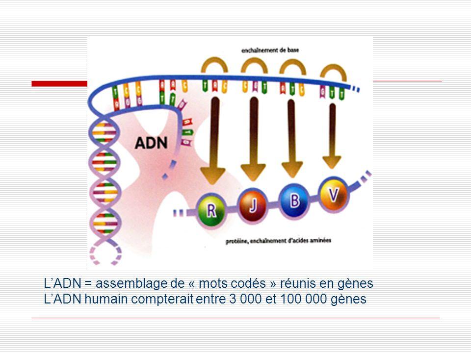 Traduction de la séquence de l'ADN en protéi