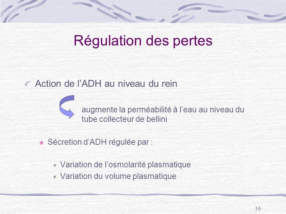 Régulation des pertes Action de l'ADH au niveau du rein