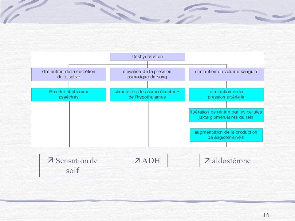  Sensation de soif  ADH  aldostérone