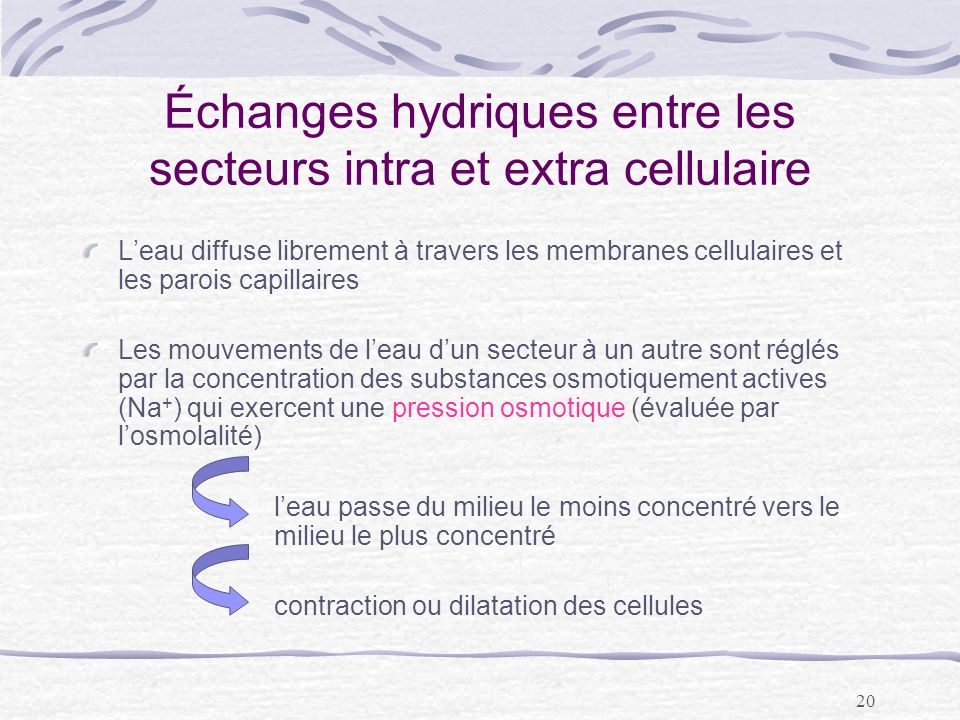 Échanges hydriques entre les secteurs intra et extra cellulaire