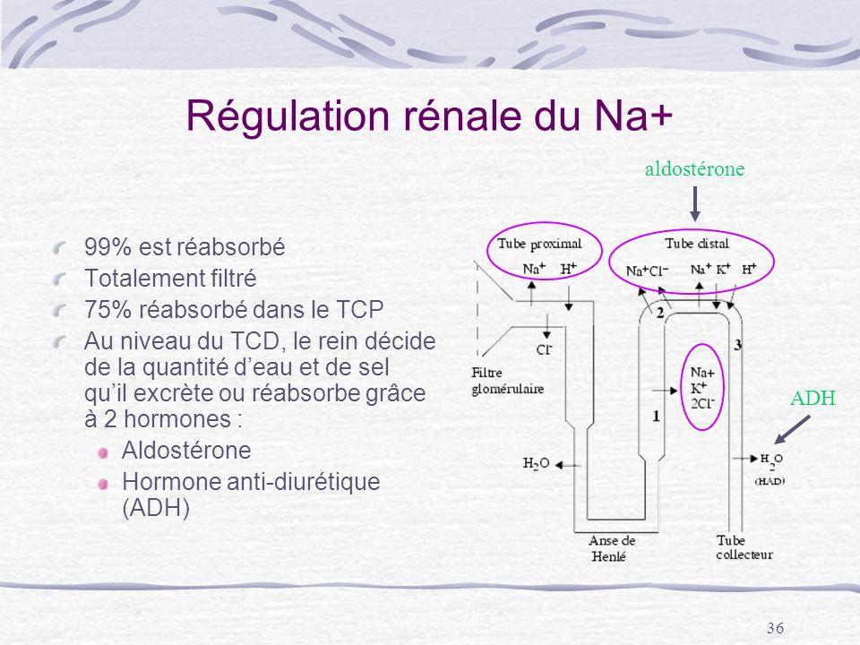 Régulation rénale du Na+