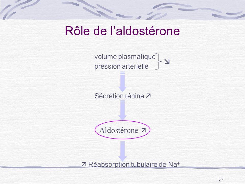 Rôle de l'aldostérone  Aldostérone  volume plasmatique