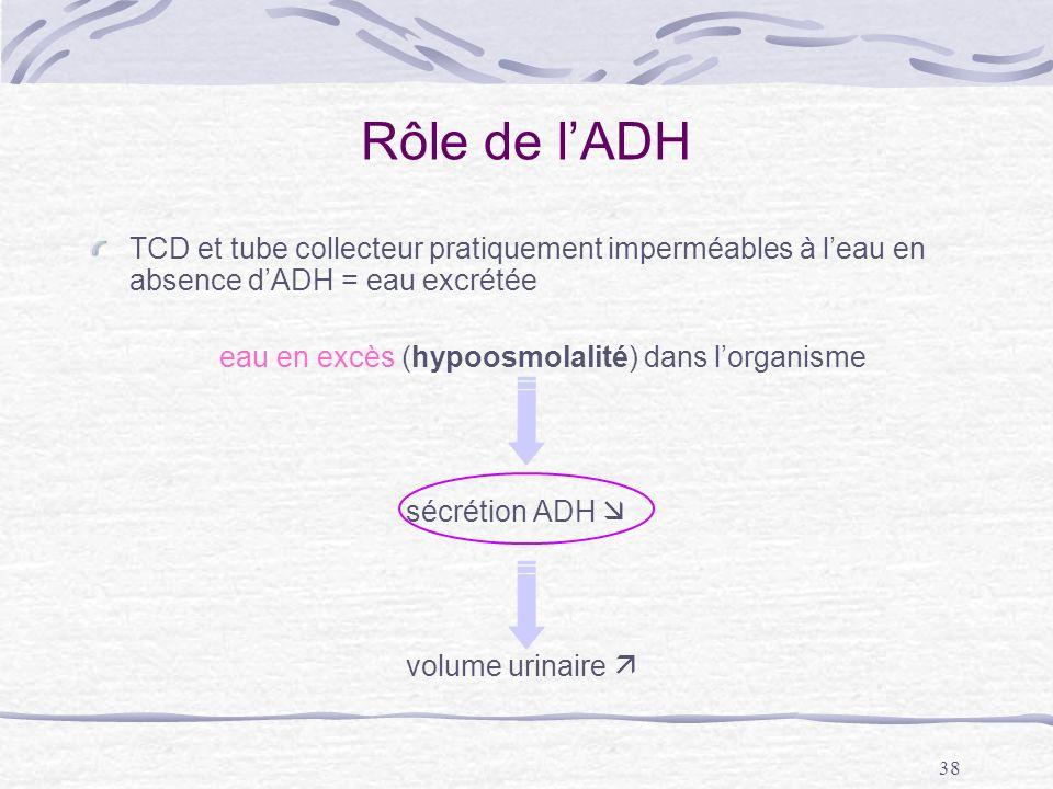 Rôle de l'ADH TCD et tube collecteur pratiquement imperméables à l'eau en absence d'ADH = eau excrétée.