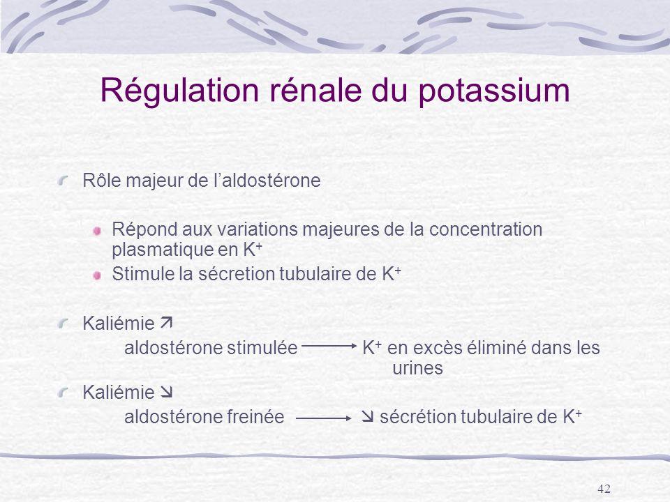 Régulation rénale du potassium