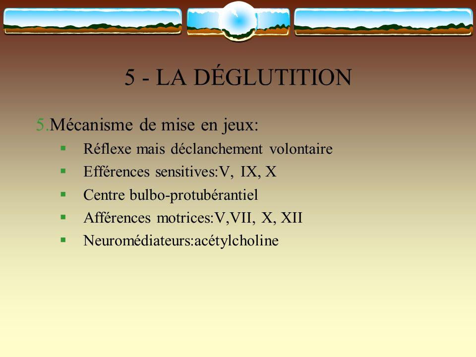 5 - LA DÉGLUTITION 5.Mécanisme de mise en jeux: