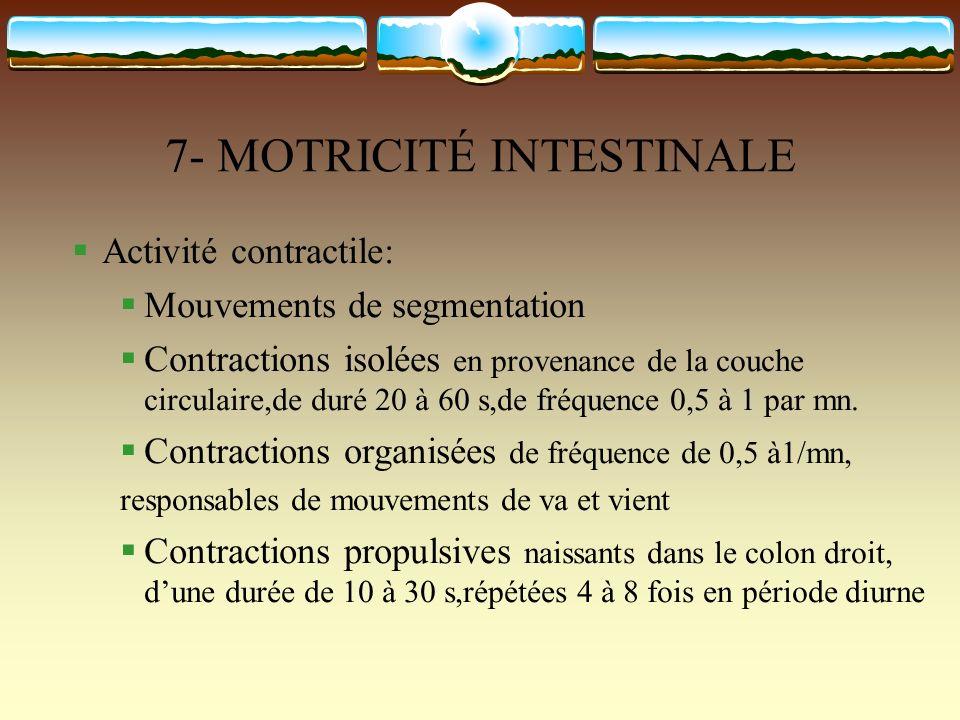 7- MOTRICITÉ INTESTINALE