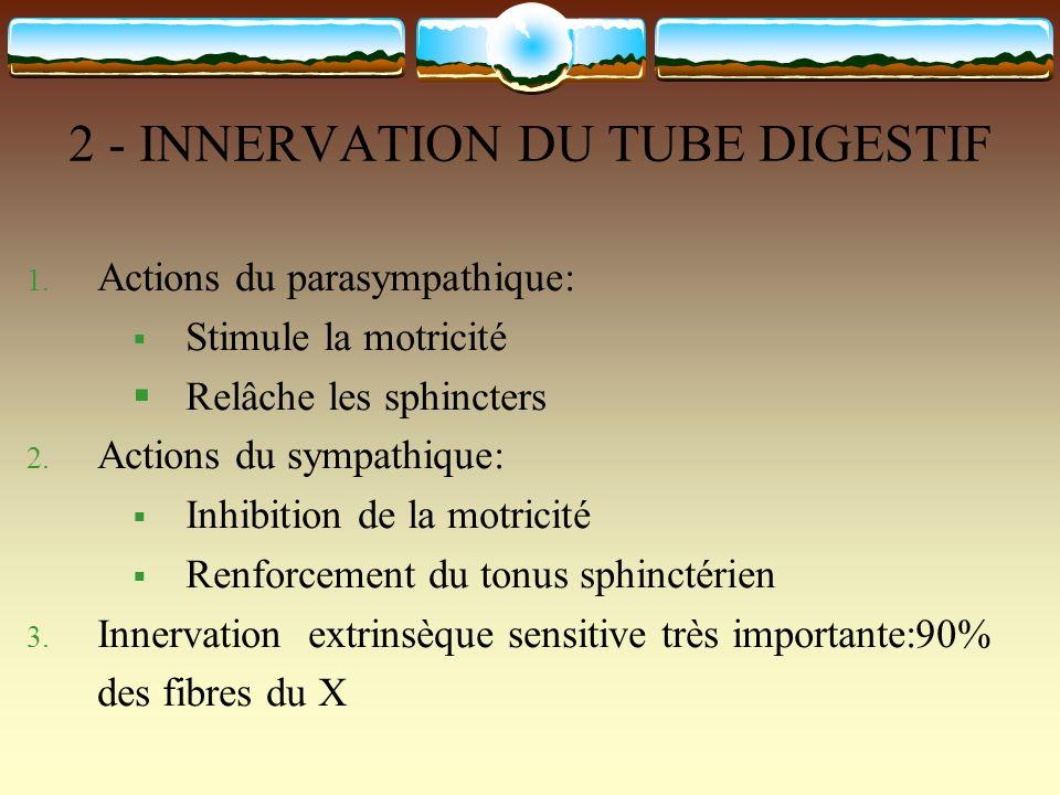 2 - INNERVATION DU TUBE DIGESTIF