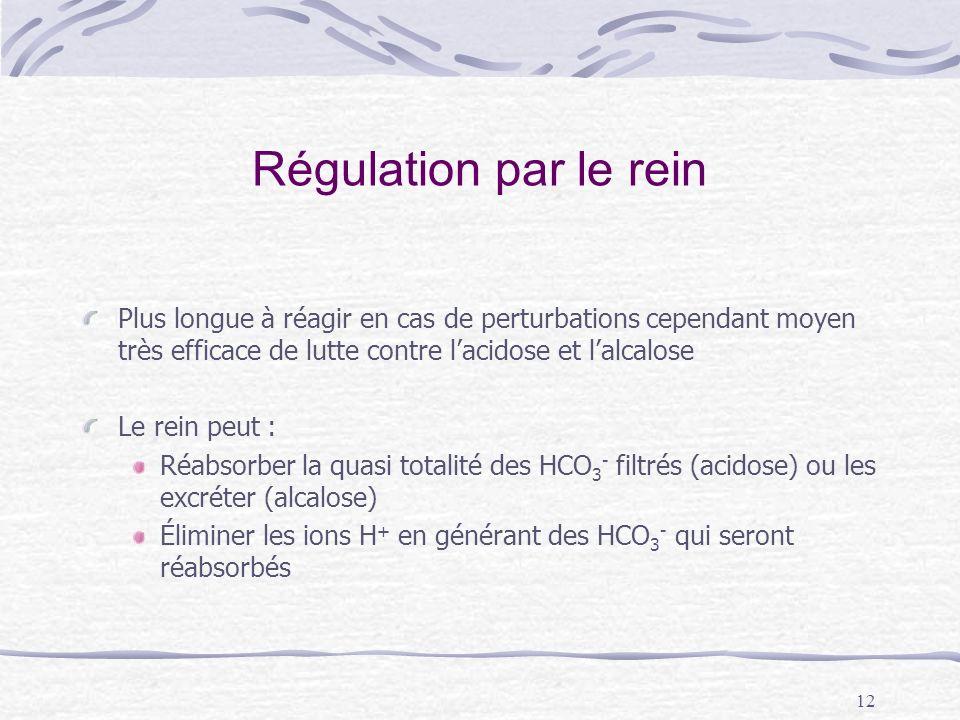 Régulation par le rein Plus longue à réagir en cas de perturbations cependant moyen très efficace de lutte contre l'acidose et l'alcalose.