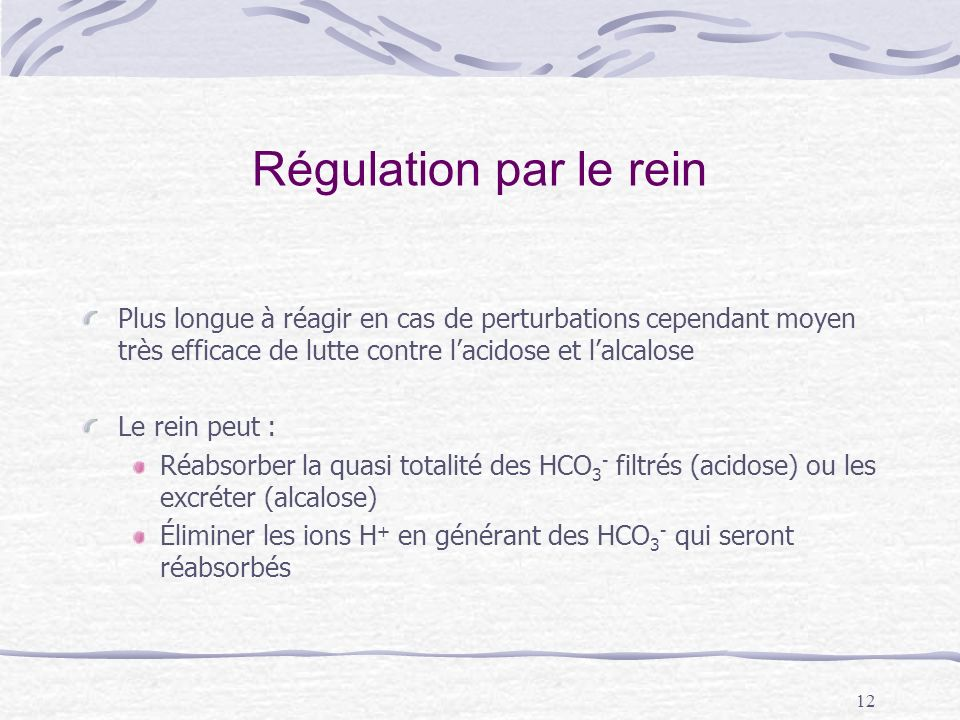 Régulation par le reinPlus longue à réagir en cas de perturbations cependant moyen très efficace de lutte contre l'acidose et l'alcalose.