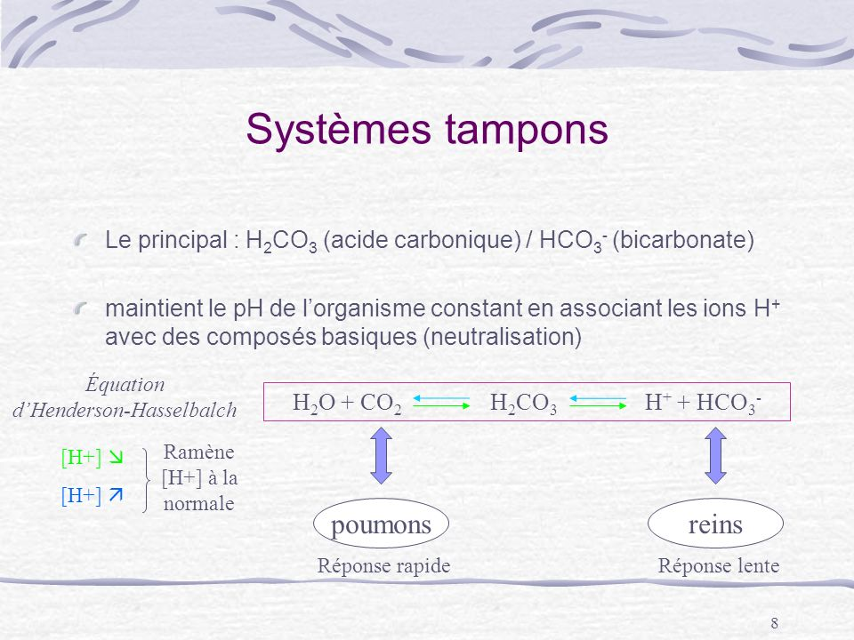 Systèmes tampons poumons reins