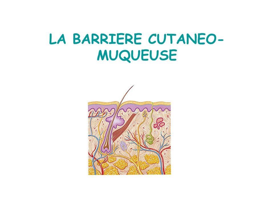 LA BARRIERE CUTANEO-MUQUEUSE