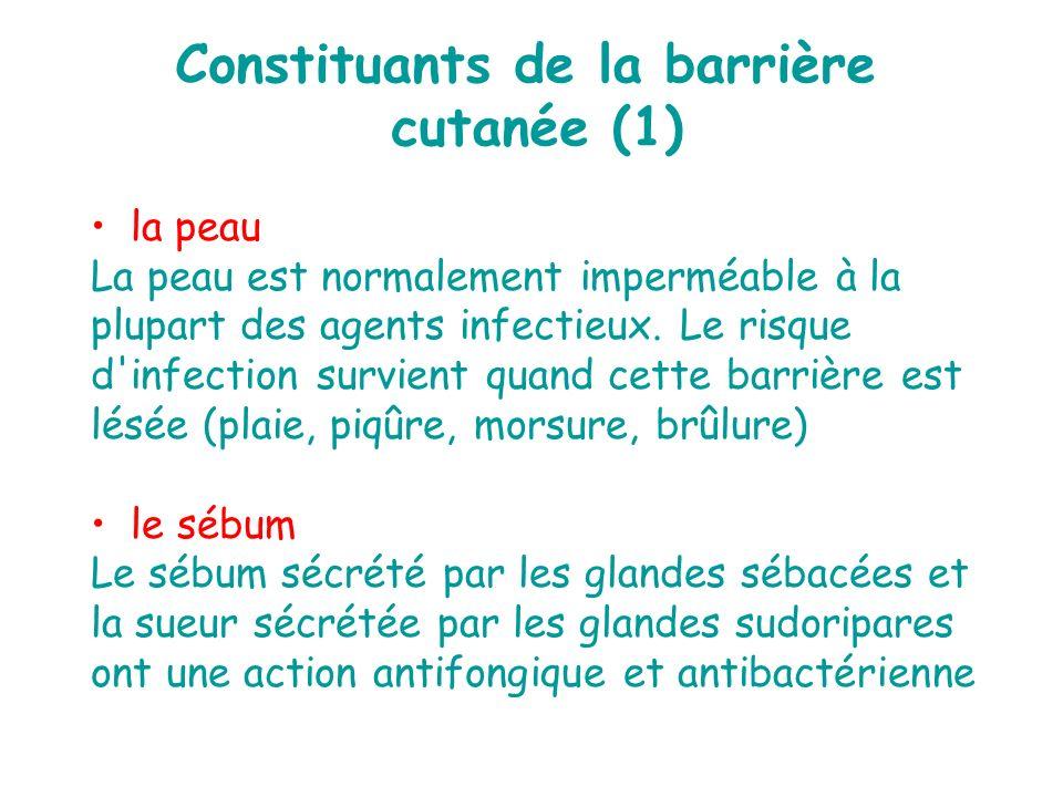 Constituants de la barrière