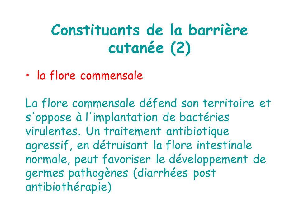 Constituants de la barrière cutanée (2)
