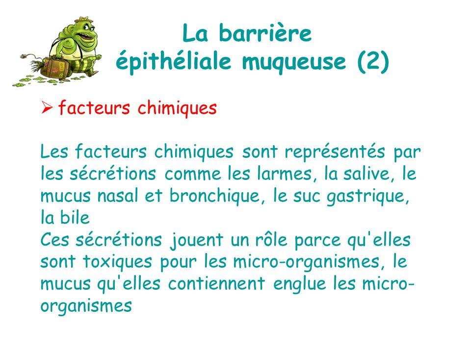 La barrière épithéliale muqueuse (2)