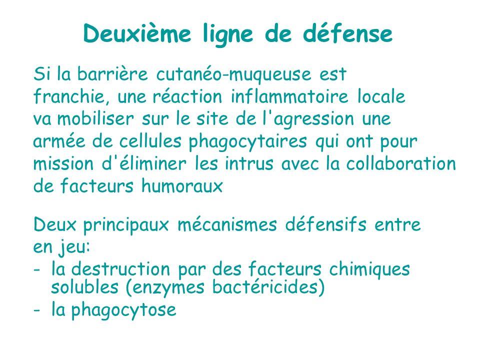 Deuxième ligne de défense