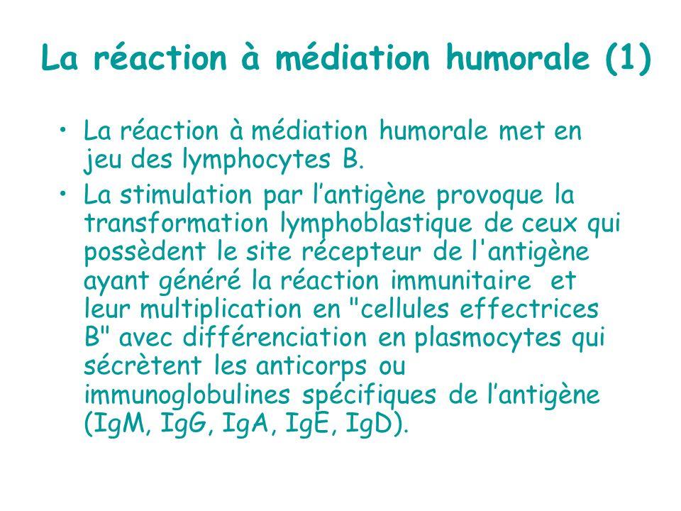 La réaction à médiation humorale (1)