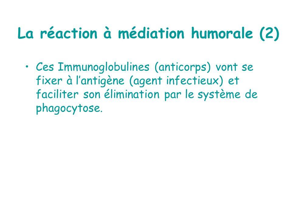 La réaction à médiation humorale (2)