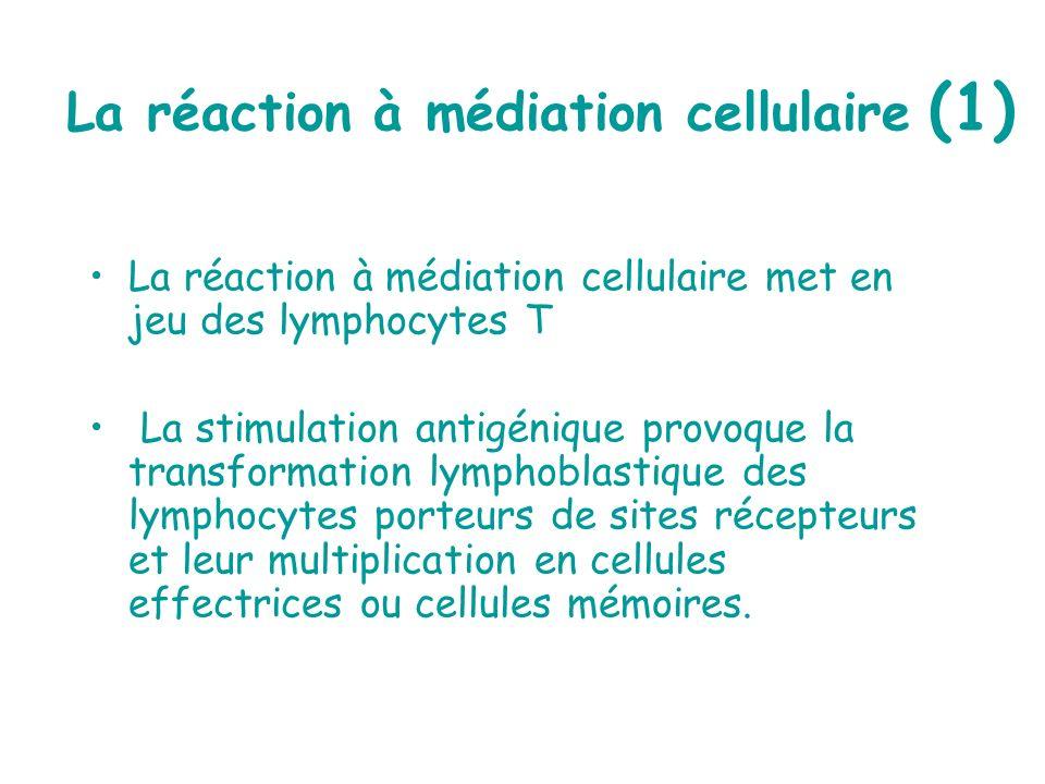 La réaction à médiation cellulaire (1)