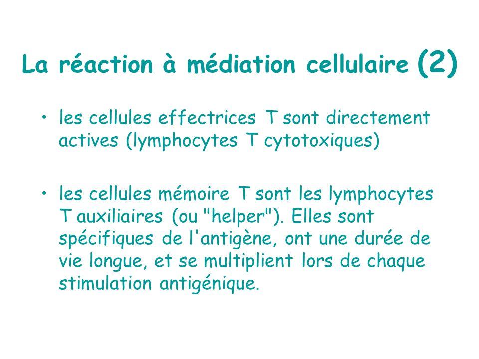 La réaction à médiation cellulaire (2)