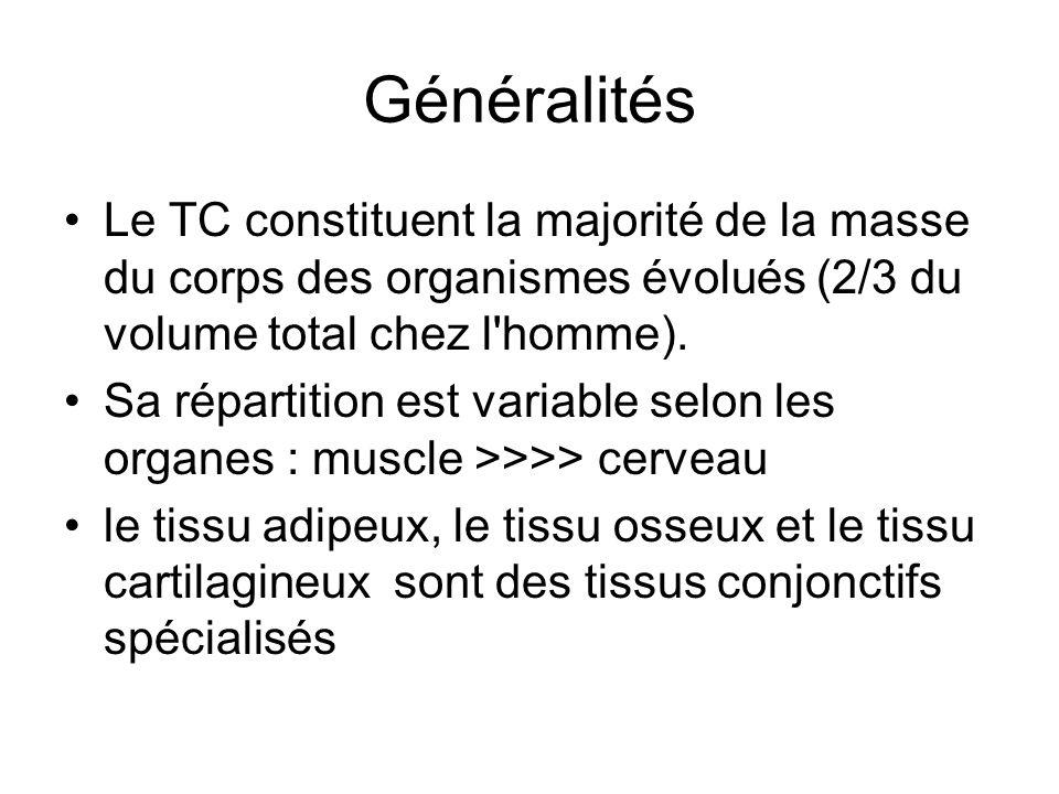 Généralités Le TC constituent la majorité de la masse du corps des organismes évolués (2/3 du volume total chez l homme).