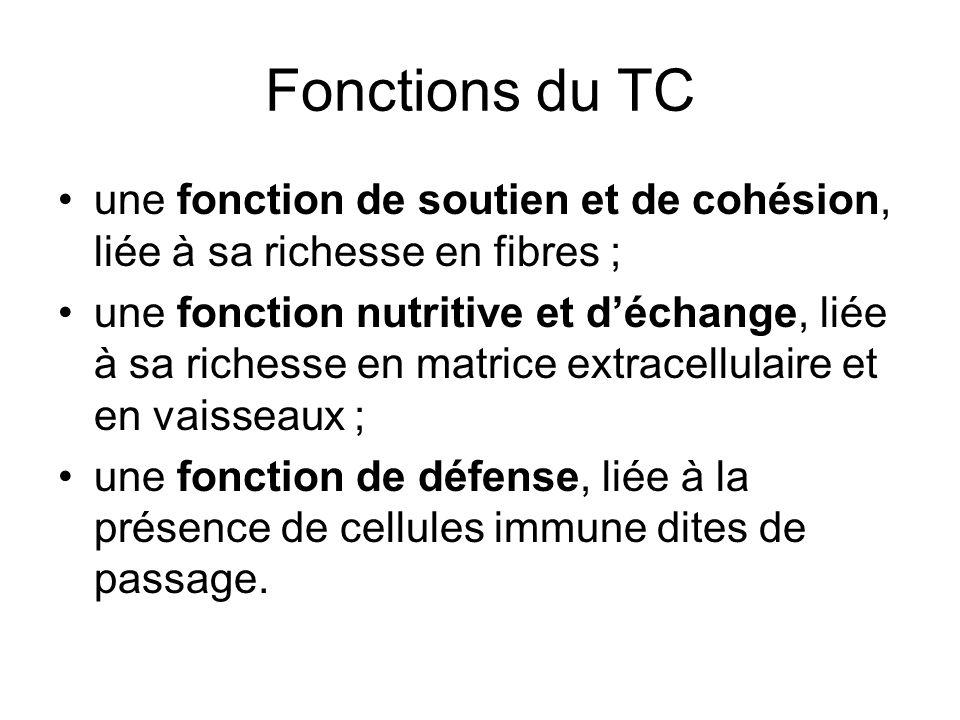 Fonctions du TCune fonction de soutien et de cohésion, liée à sa richesse en fibres ;