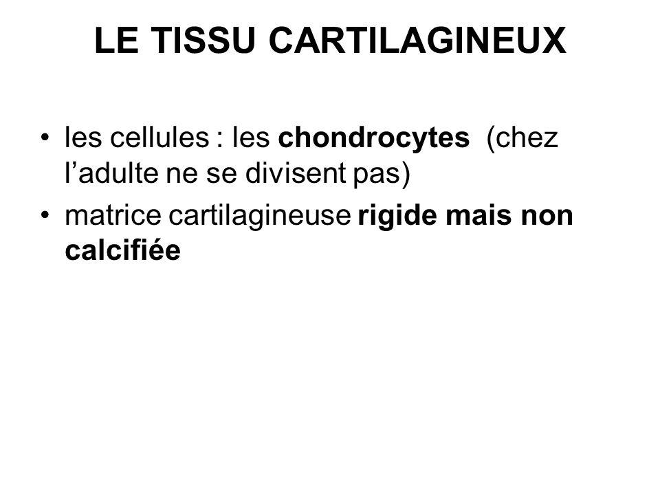 LE TISSU CARTILAGINEUX
