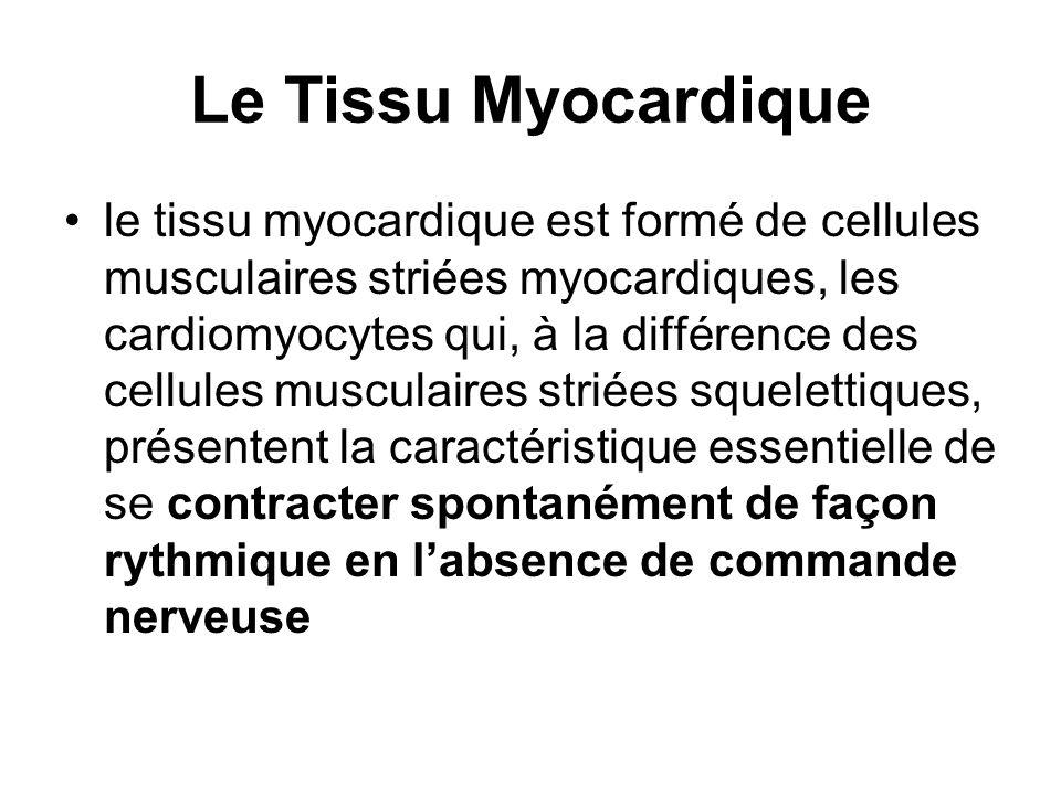Le Tissu Myocardique