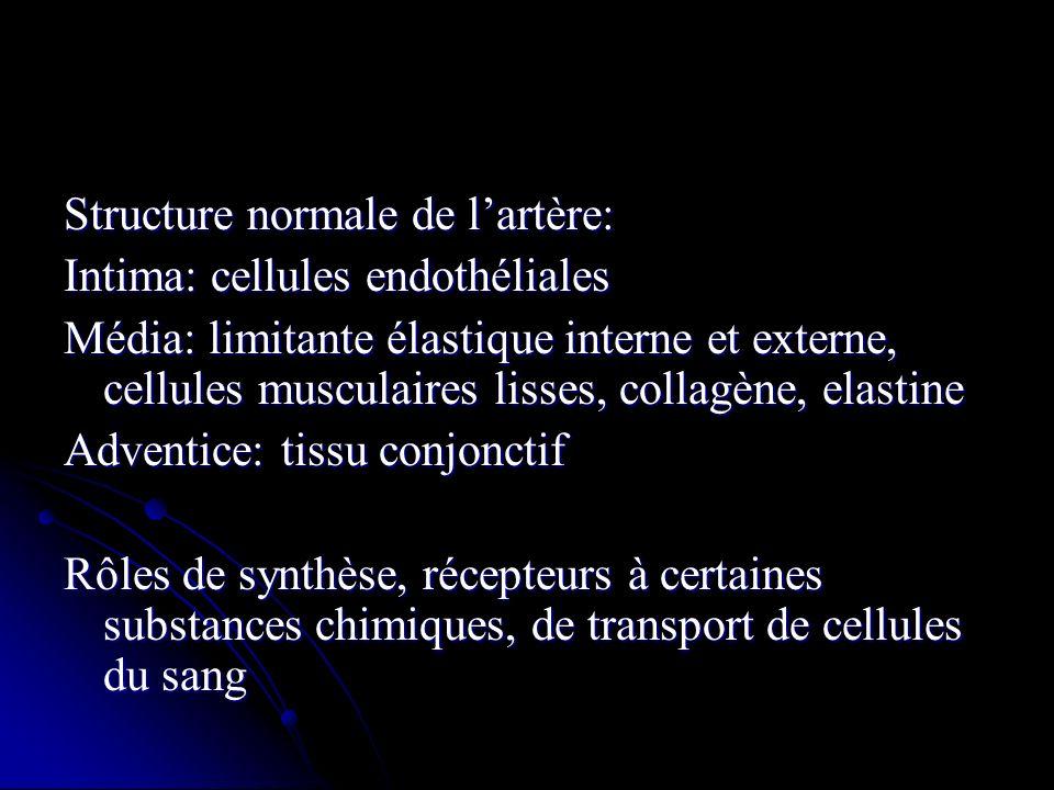 Structure normale de l'artère:
