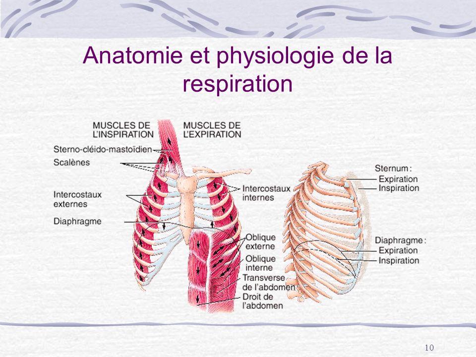 Anatomie et physiologie de la respiration