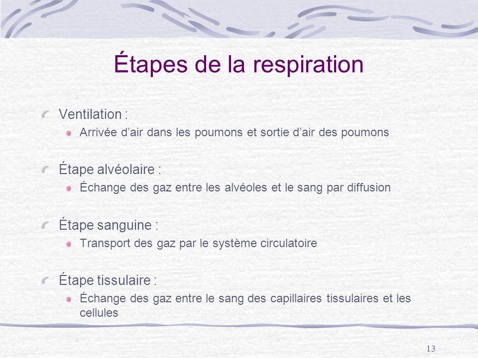 Étapes de la respiration