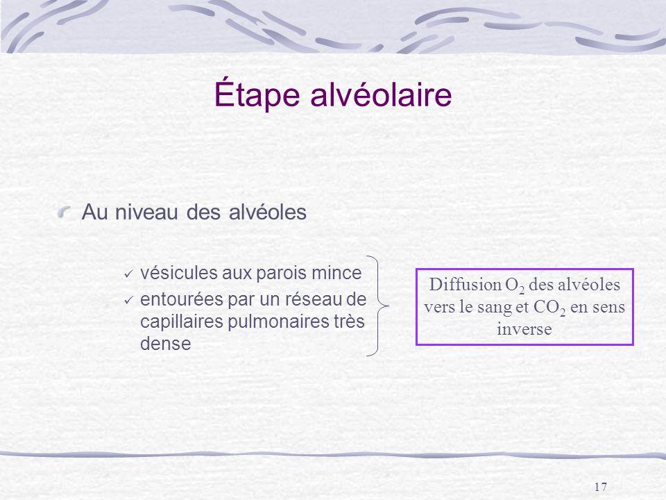 Diffusion O2 des alvéoles vers le sang et CO2 en sens inverse