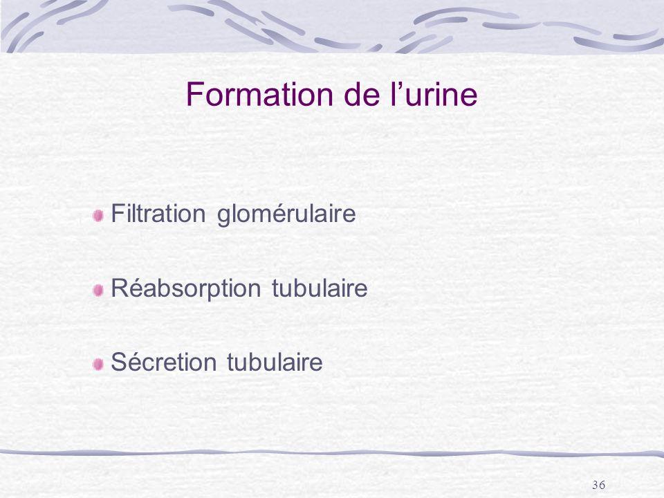 Formation de l'urine Filtration glomérulaire Réabsorption tubulaire