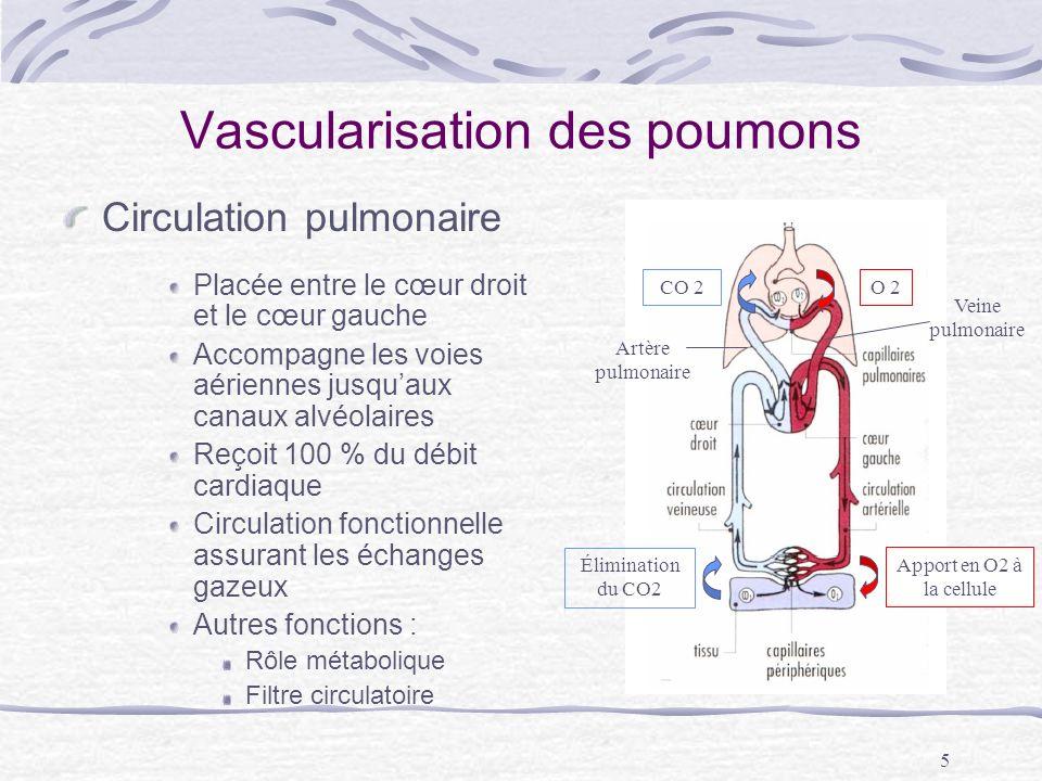 Vascularisation des poumons