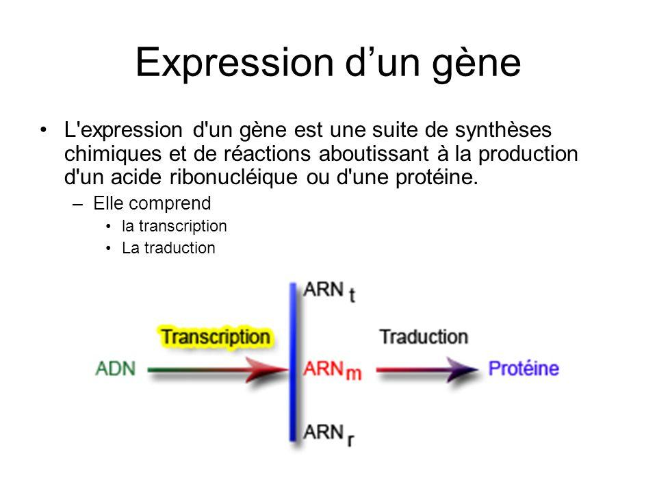 Expression d'un gène