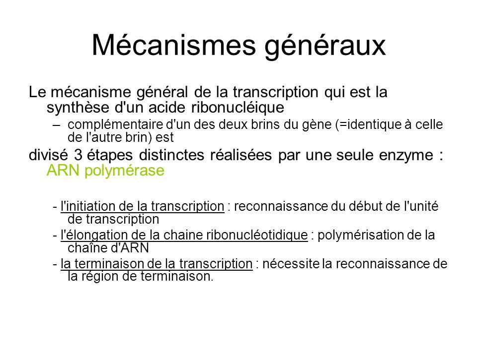 Mécanismes généraux Le mécanisme général de la transcription qui est la synthèse d un acide ribonucléique.