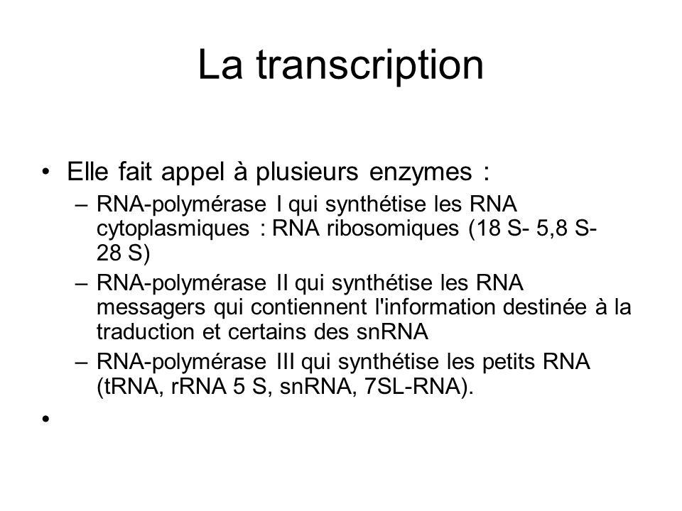 La transcription Elle fait appel à plusieurs enzymes :