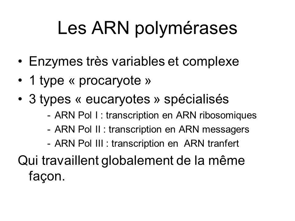Les ARN polymérases Enzymes très variables et complexe