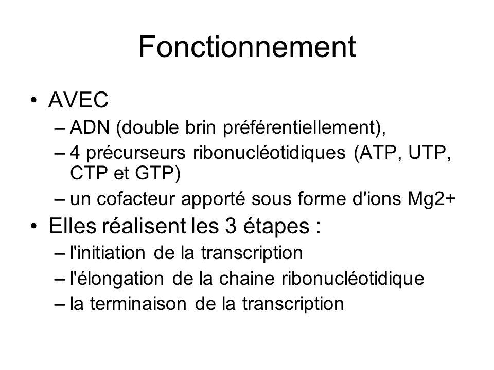 Fonctionnement AVEC Elles réalisent les 3 étapes :