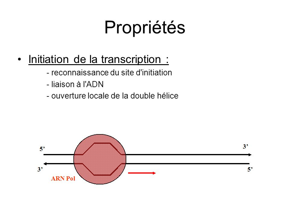 Propriétés Initiation de la transcription :