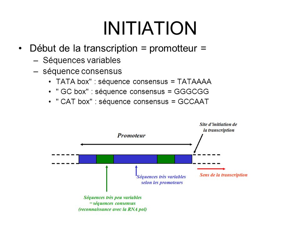INITIATION Début de la transcription = promotteur =
