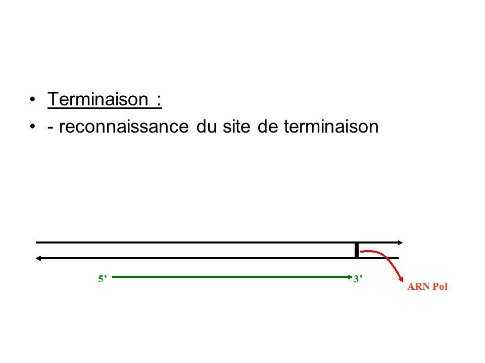 Terminaison : - reconnaissance du site de terminaison