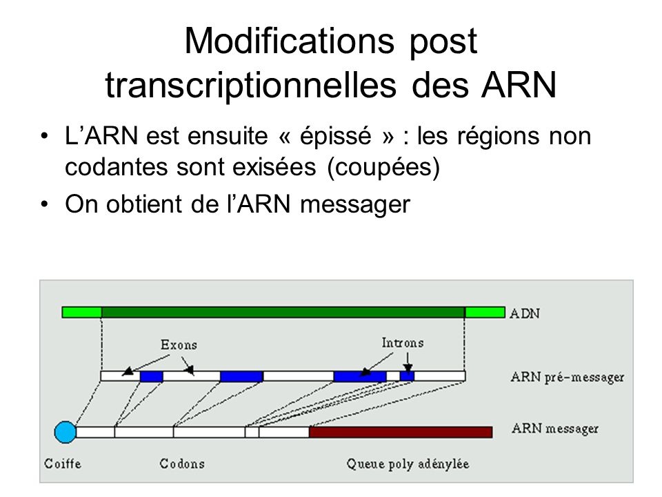 Modifications post transcriptionnelles des ARN