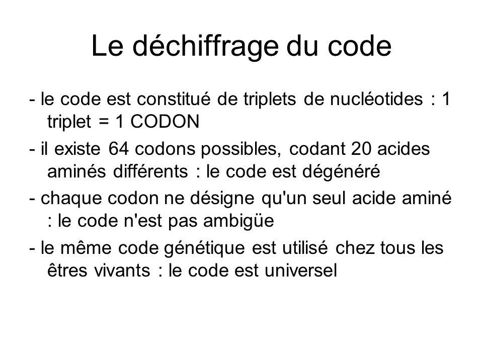Le déchiffrage du code - le code est constitué de triplets de nucléotides : 1 triplet = 1 CODON.