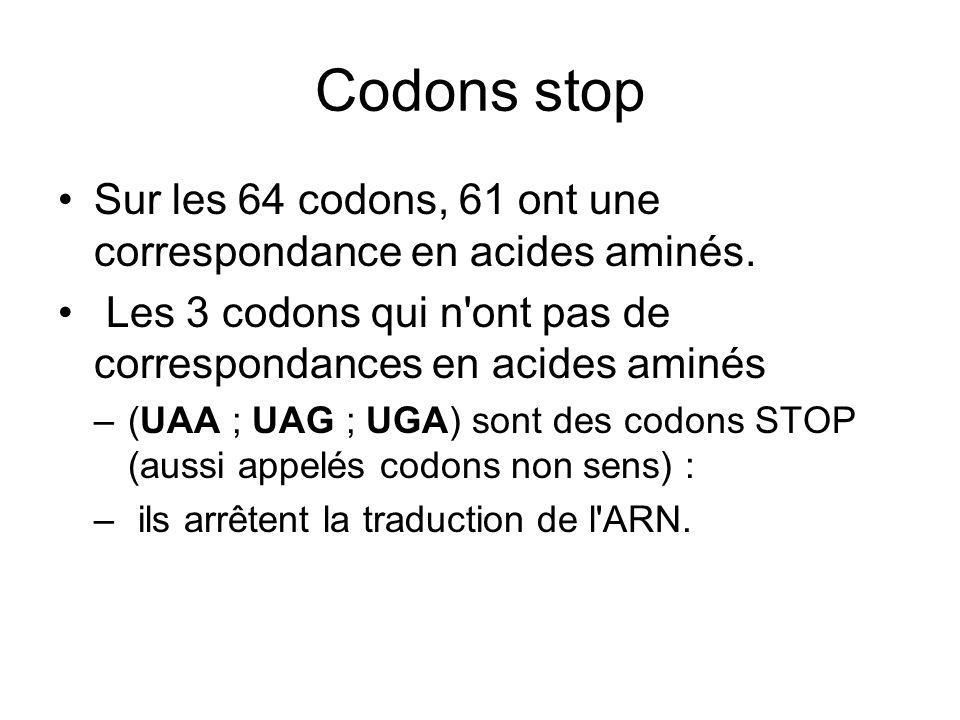 Codons stop Sur les 64 codons, 61 ont une correspondance en acides aminés. Les 3 codons qui n ont pas de correspondances en acides aminés.
