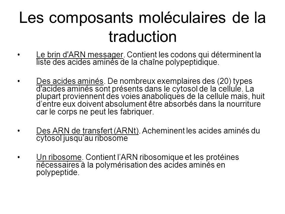 Les composants moléculaires de la traduction