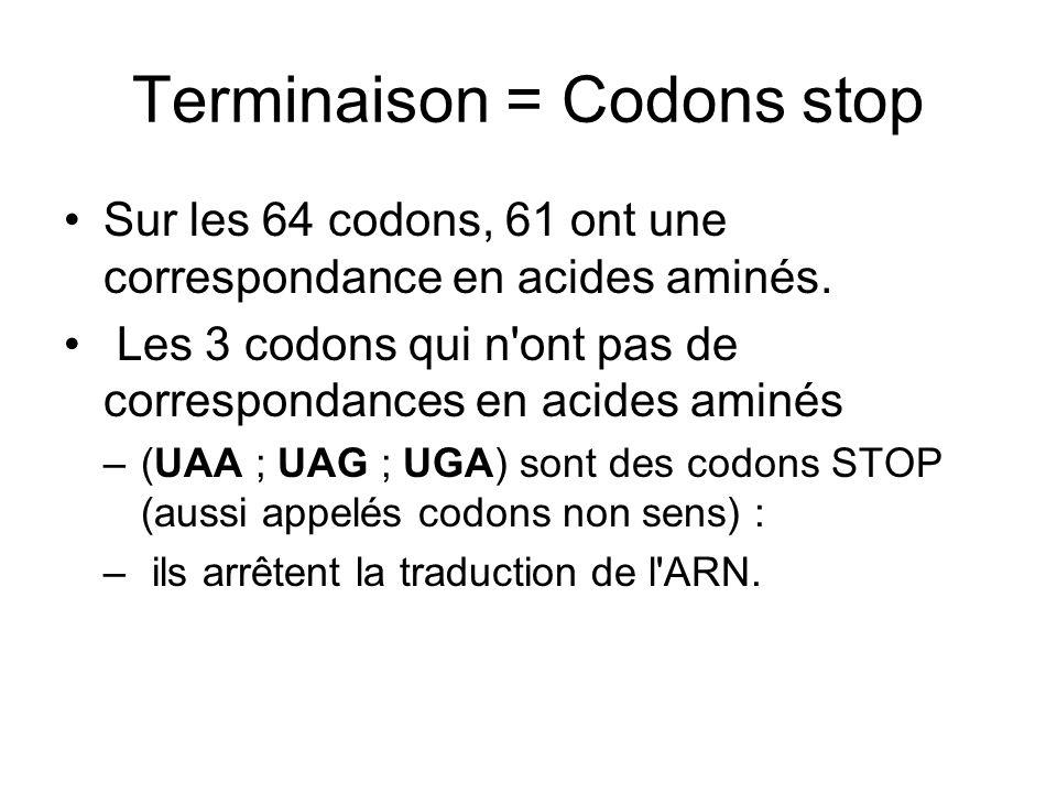 Terminaison = Codons stop
