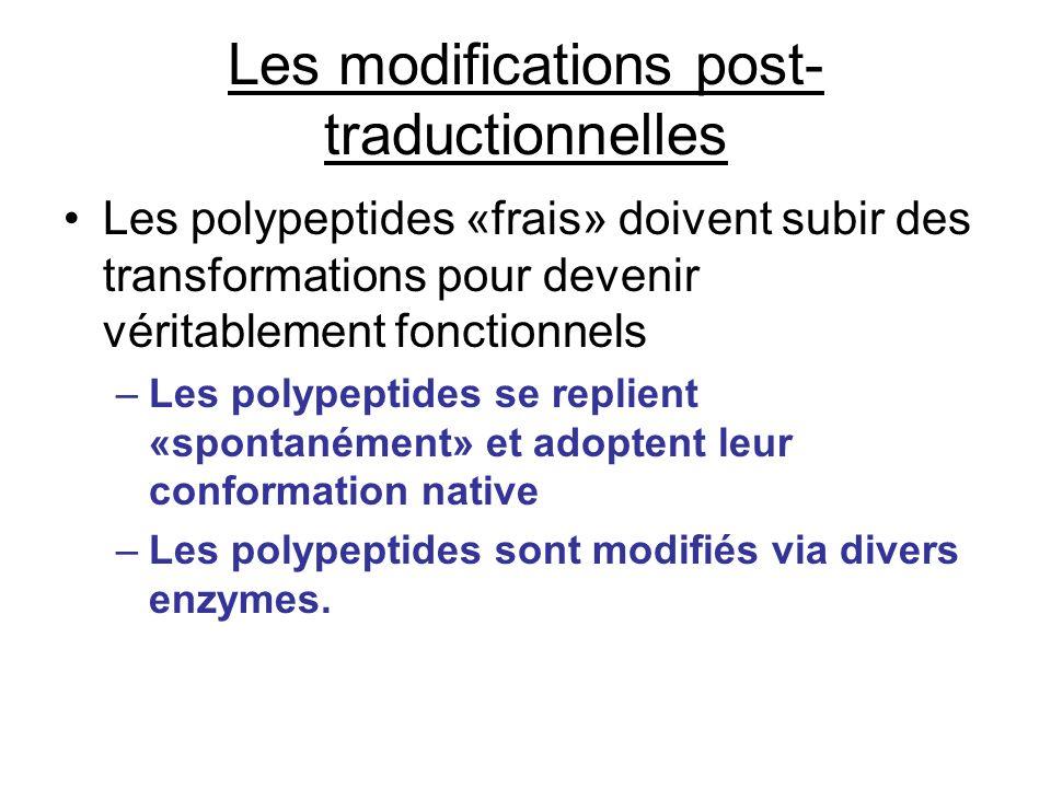 Les modifications post-traductionnelles