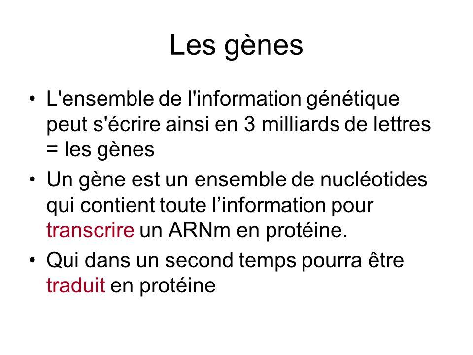 Les gènes L ensemble de l information génétique peut s écrire ainsi en 3 milliards de lettres = les gènes.